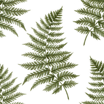 Green watercolor fern leaves seamless pattern isolated on white background. Real watercolor. Botanical illustration.