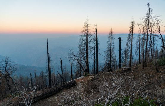 Sunrise View of the Forest Fire at Yosemite National Park