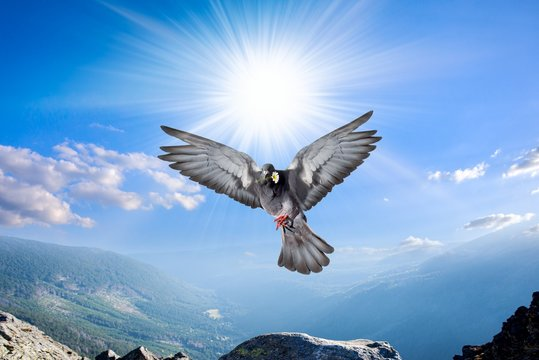 Dove in the air with wings wide open . Angel Bird in Heaven