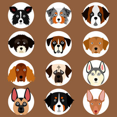 set of large and medium dogs face