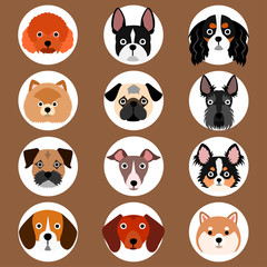 set of small dogs face