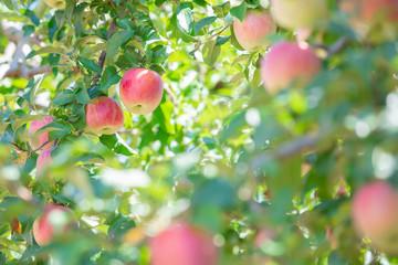 飯田市 りんご並木の風景