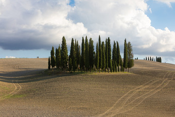 Wall Murals Melon Cypress Trees in San Quirico D´orcia Tuscany italy
