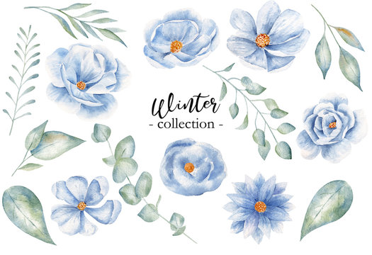 Winter leaves and blossoms watercolor raster illustration collection