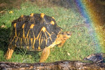 Turtles n Rainbows
