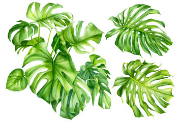 set of palm leaves, tropical monstera plant on an isolated white background, watercolor, hand-drawing, botanical illustration