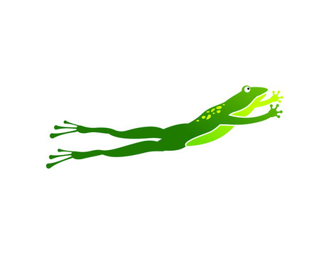 frog toad leap or jump