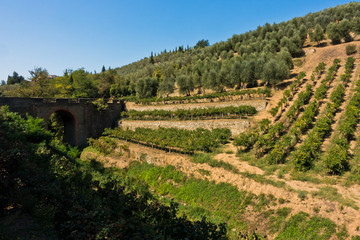 Hiking hills and backroads with vineyards and olive trees at autumn, near Vinci in Tuscany, Italy