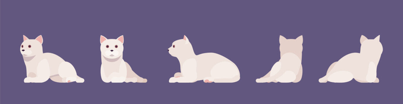 White pedigree cat lying and rest. Active healthy kitten with beautiful fur and light coat, cute funny pet, home playful loving companion. Vector flat style cartoon illustration different views