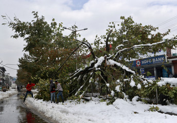 People cut branches of a fallen tree in a snow-covered road following the season's first snowfall in Srinagar