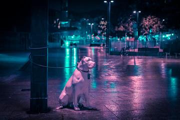 perro abandonado en las calles de la ciudad de noche Wall mural