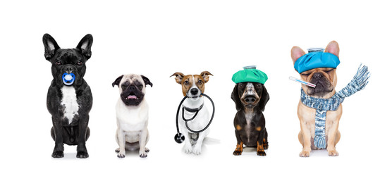 Fotorolgordijn Crazy dog medical doctor sick ill dogs