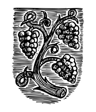 Symbol of winemakers, coat of arms with grapes, linocut