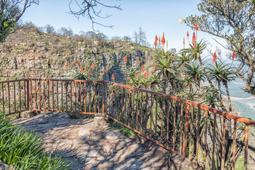 Aloes at a viewpoint at Gods Window