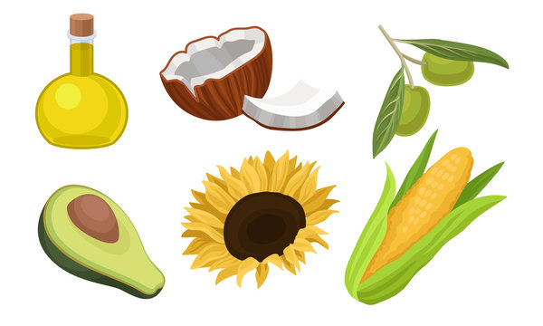 Vegetable Oil And Raw Materials For It Vector Illustration Set Isolated On White Background