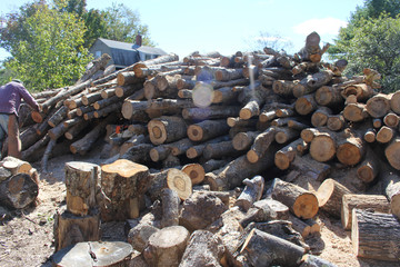 pile of wood logs firewood with man