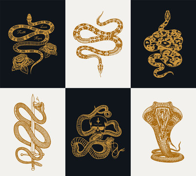 Milk snake with roses, skeleton royal python with skull, reptile with sword, Venomous Cobra. Poisonous Viper template for poster or tattoo. Engraved hand drawn old Vintage sketch for t-shirt or logo.