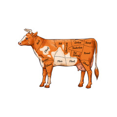 Cartoon cow with body part names for meat butcher cut guide