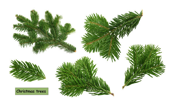 christmas trees isolated on white background