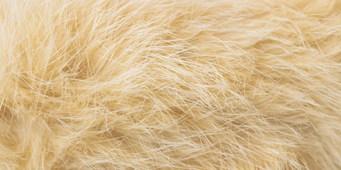 cat fur brown color. background and texture
