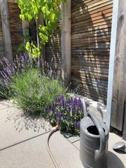 Moderne Gartengestaltung mit Gräsern, Stauden und Weinreben