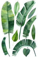 set of palm green leaves, tropical plants on an isolated white background, watercolor illustration, hand drawing