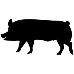 Schattenbild von einem Schwein, Ferkel, isoliert freigestellt vor weißem Hintergrund