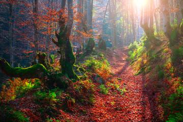 Scenic vivid autumnal background