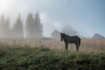 The horse graze on the meadow in the Carpathian Mountains. Misty landscape. Morning fog high in the...