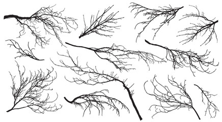 Chestnut, poplar, maple, oak and etc. branches trees. Set of silhouettes. Vector illustration.