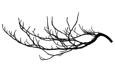 Chestnut branch silhouette. Tree branch, vector illustration. Fototapete