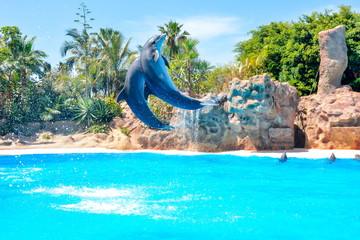 Spoed Fotobehang Dolfijn Dolphin show in Loro park, Tenerife, Canary islands, Spain