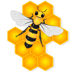 Vector illustration of honey bee and honeycomb  on white background...