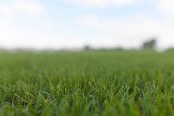 The grass pitch