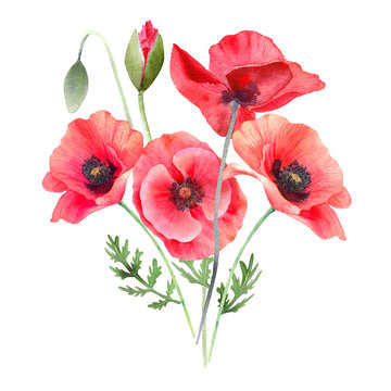 Watercolor red poppies. Wild flower bouquet isolated on white. Hand painting illustration for interior decoration, textile printing, printed issues, invitation and greeting cards.
