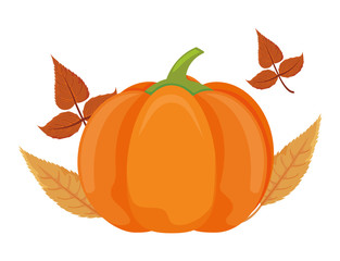 pumpkin in harvest with autumn leaves on white background
