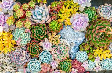 Tuinposter Bloemen colorful Rectangular arrangement of succulents; cactus succulents in a planter