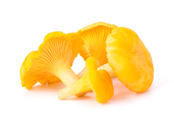 Yellow Chanterelle Isolated on White Background Close-Up