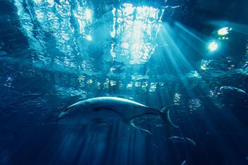 巨大水槽の魚たち