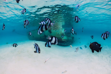 Ocean scene with wreck of boat at sandy bottom and school of fish, underwater in Mauritius