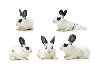 Cute white baby rabbit on white background