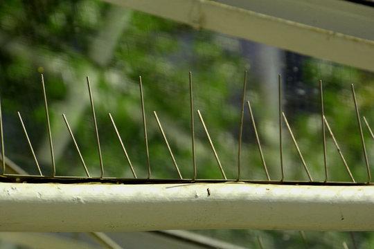 close-up of bird control spikes under a glass roof top, metal bird spikes as bird control background