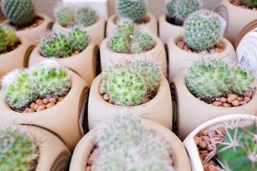 Photo sur Aluminium Cactus Small cactus is pot for decoration