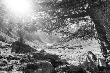 Fototapete - Lichtstrahlen in einer Berglandschaft im Zillertal in schwarz weiß