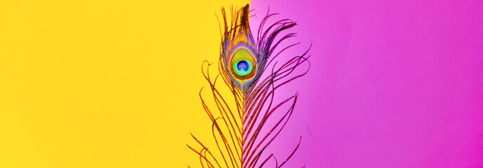 Photo sur Plexiglas Paon peacock feathers on pink background,peacocks tail on yellow background, text space ,written text space