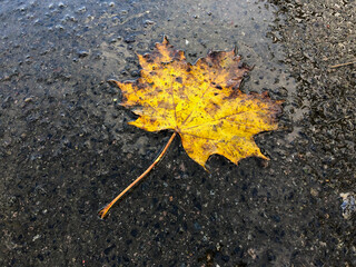 Single Leaf in puddle