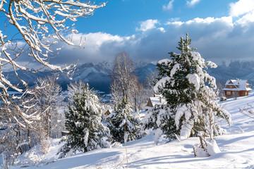 fluffy snow on the trees in popular polish ski resort - Zakopane, Tatra mountain, Poland