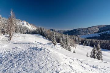 beautiful winter landscape in sunny day