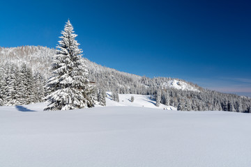 view on winter landscape with snow in sunny day