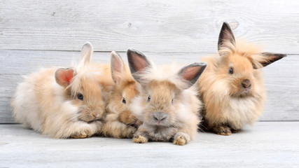 Group of lovely bunny easter rabbits on wooden background. beautiful lovely pets. Wall mural